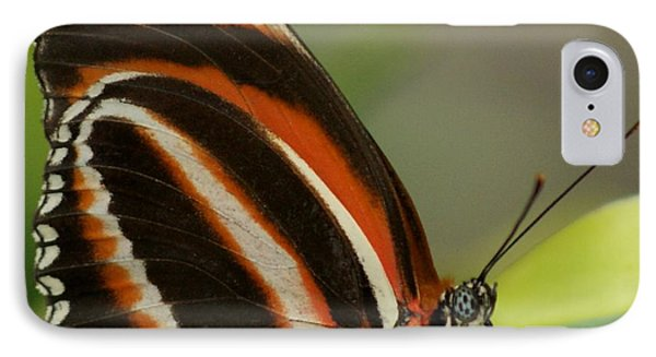 Butterfly Autumn With Green Head Phone Case by Gail Matthews