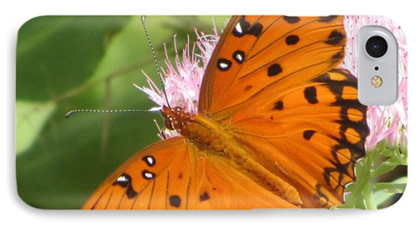 Butterfly Butterfly 2  IPhone Case by Cathy Lindsey