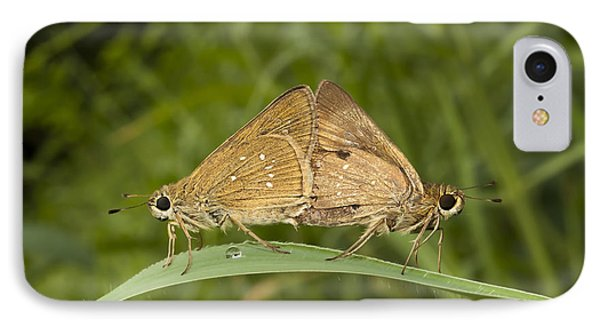 Butterfly Chestnut Bob Iambrix Salsala Mating IPhone Case by Rudra Narayan  Mitra