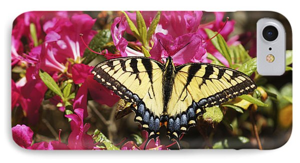 Butterfly IPhone Case by Debra Crank