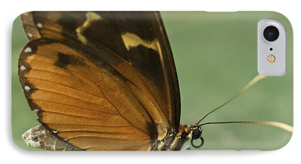 Butterfly Eueides Isabella IPhone Case
