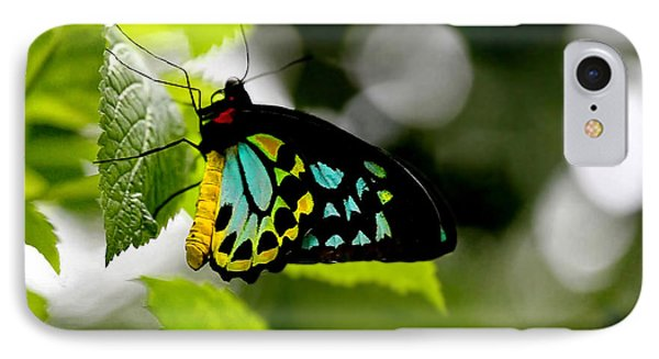 Butterfly Iv IPhone Case by Tom Prendergast