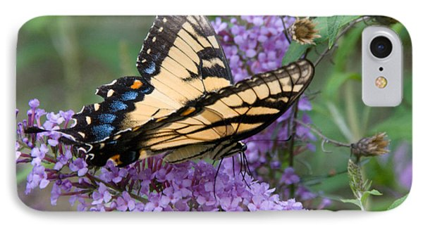 Butterfly Landing IPhone Case by Greg Graham