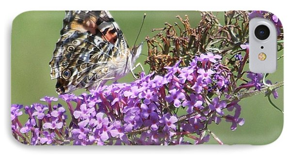 IPhone Case featuring the photograph Painted Lady Butterfly by Eunice Miller