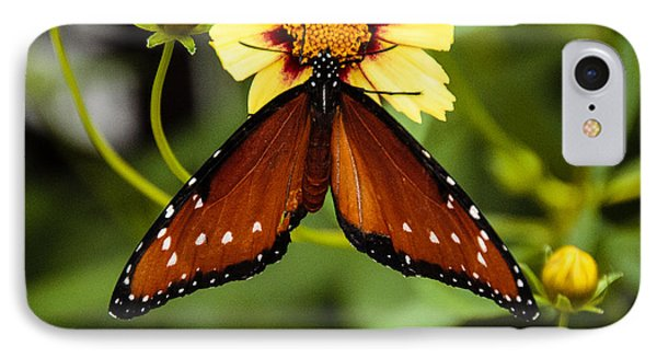 IPhone Case featuring the photograph Butterfly On Coreopsis by Cathy Donohoue