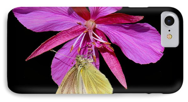 Butterfly On Fireweed IPhone Case by Myrna Bradshaw