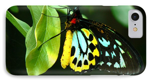 Butterfly On Leaf IPhone Case by Laurel Powell