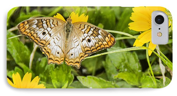 Butterfly On Yellow Flower IPhone Case by Don Durfee