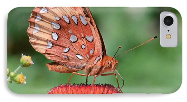 Butterfly Sipping A Coneflower IPhone Case