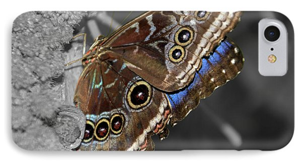 Butterfly Spot Color 1 IPhone Case