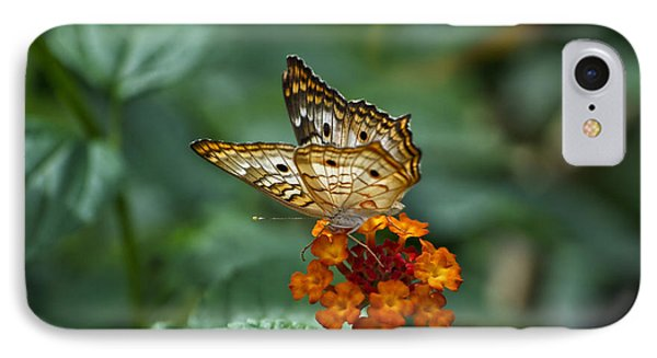 IPhone Case featuring the photograph Butterfly Wings Of Sun Light by Thomas Woolworth