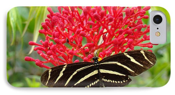 Butterfly With Its Host IPhone Case