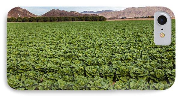 Butterhead Lettuce Farm IPhone Case by Robert Bales