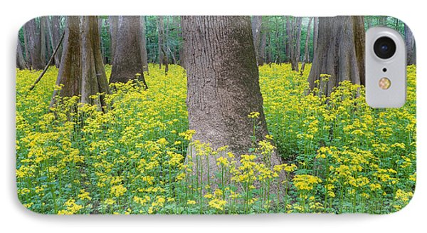Butterweed Blooming In Congaree IPhone Case by Jeff Lepore