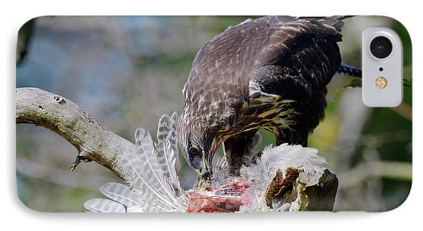 Buzzard iPhone 7 Case - Buzzard Preying On A Bird Carcass by Dr P. Marazzi