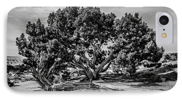 Bw Limber Pine IPhone Case