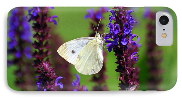 Cabbage White Butterfly IPhone Case by Christina Rollo