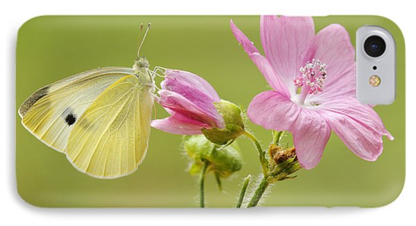 Cabbage White Butterfly On Flower IPhone Case by Silvia Reiche