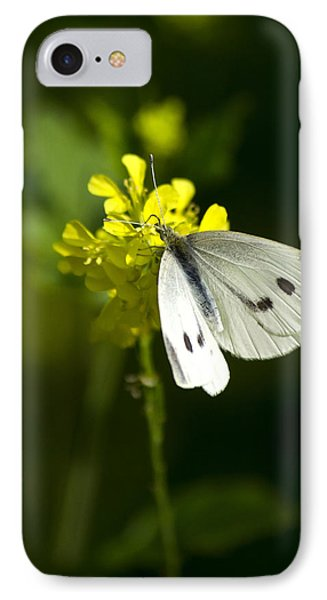 Cabbage White Butterfly On Yellow Flower IPhone Case by Christina Rollo