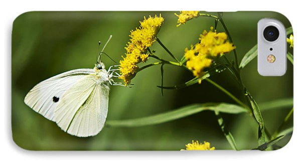 Cabbage White Butterfly On Yellow Flowers IPhone Case by Christina Rollo