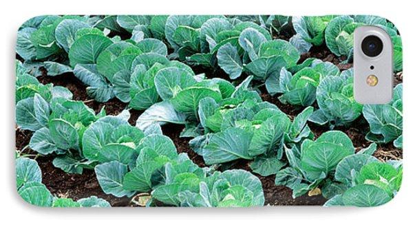Cabbage, Yamhill Co, Oregon, Usa IPhone Case