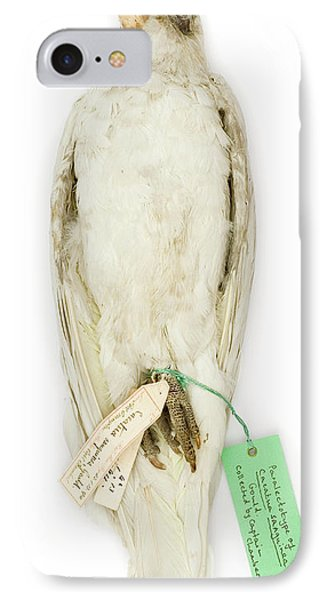 Cockatoo iPhone 7 Case - Cacatua Sanguinea by Natural History Museum, London