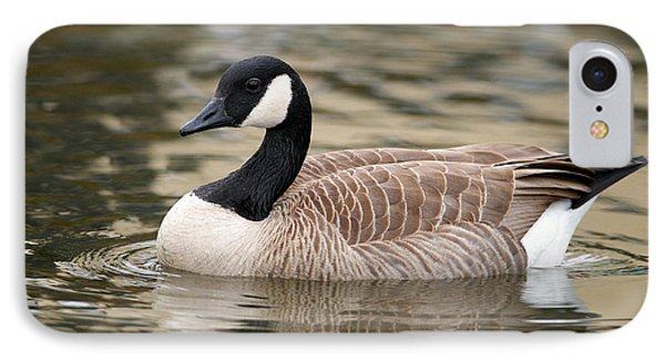 Cackling Goose IPhone Case by Sharon Talson