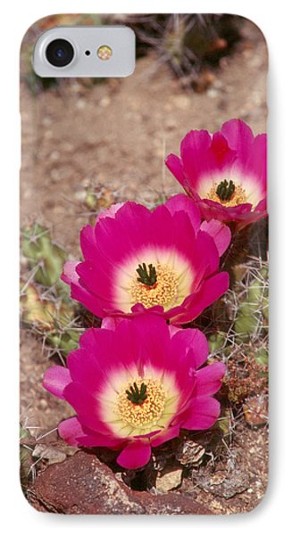 Cactus 1 IPhone Case by Andy Shomock