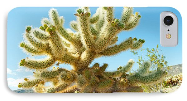 Cactus At Joshua Tree National Park IPhone Case by Panoramic Images