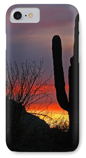 Cactus At Sunset IPhone Case by Marcia Socolik