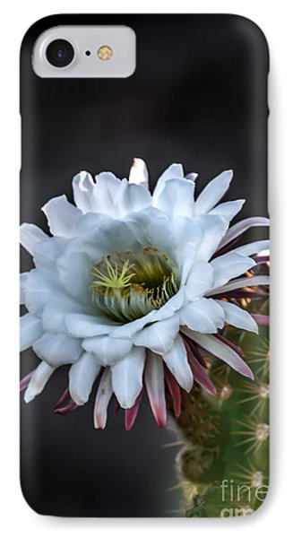 Cactus Beauty IPhone Case by Robert Bales