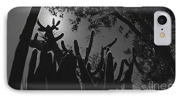 IPhone Case featuring the photograph Cactus Family by Kenny Glotfelty