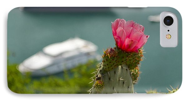 Cactus Flower Above The Port Of Nice Phone Case by Allen Sheffield