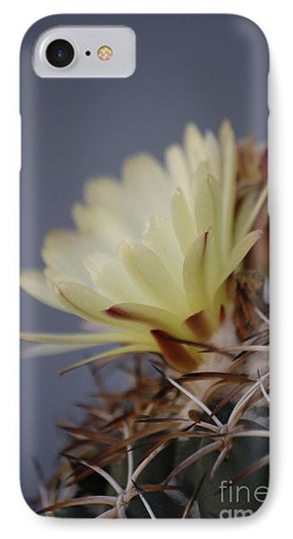 Cactus Flower IPhone Case by Anne Rodkin