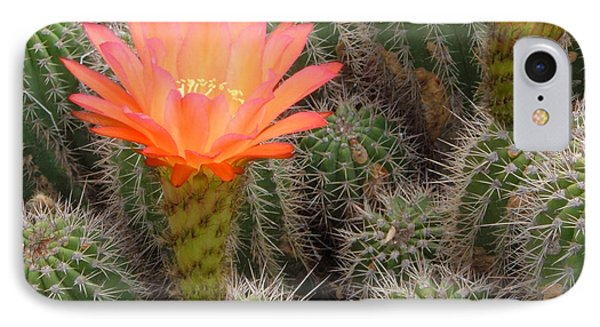 IPhone Case featuring the photograph Cactus Flower by Cheryl Del Toro