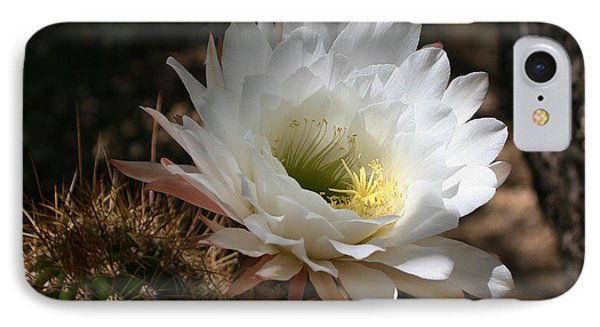 Cactus Flower Full Bloom IPhone Case by Tom Janca
