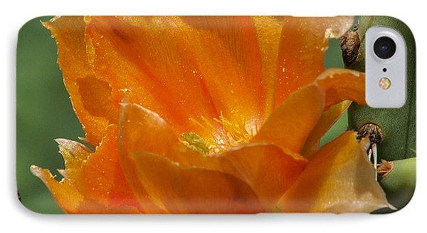 Cactus Flower In Orange IPhone Case by Toma Caul