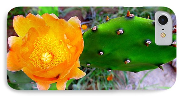 Cactus Flower IPhone Case by Randall Weidner