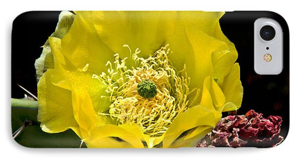 IPhone Case featuring the photograph Cactus Flower by Sherry Davis