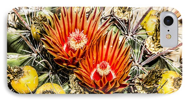 Cactus Flowers And Fruit IPhone Case by Photographic Art by Russel Ray Photos
