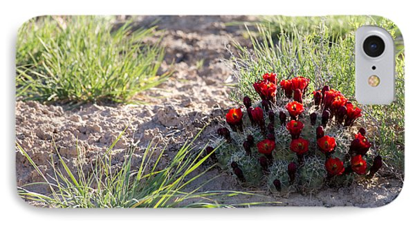 Cactus Flowers IPhone Case by Brian Magnier