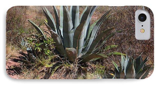 Cactus In Peru IPhone Case