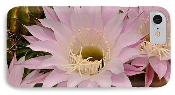 IPhone Case featuring the photograph Cactus In The Backyard by Debby Pueschel