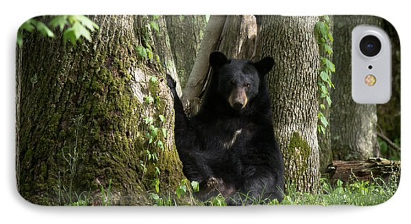 Cades Cove Bear IPhone Case