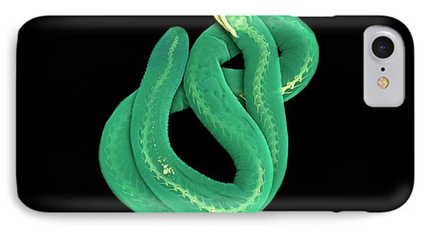 Caecilian IPhone Case by Dan Sykes/natural History Museum, London