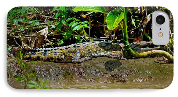 Caiman Cocodilus Phone Case by Gary Keesler