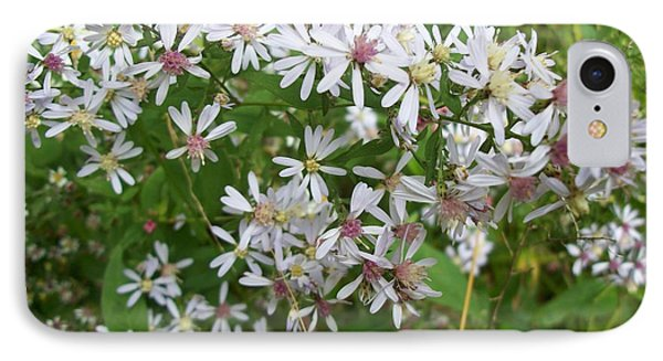 Calico Aster Wildflower IPhone Case