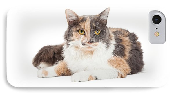 Calico Domestic Longhair Cat Laying IPhone Case by Susan Schmitz