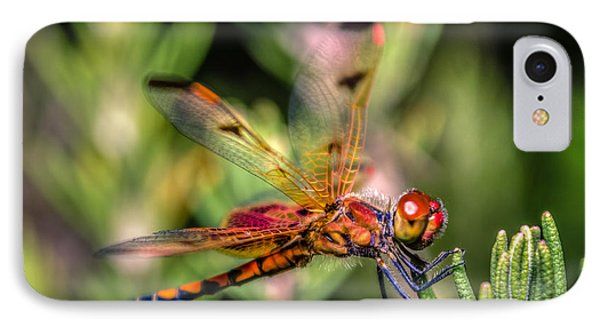 Calico Pennant IPhone Case by Rob Sellers