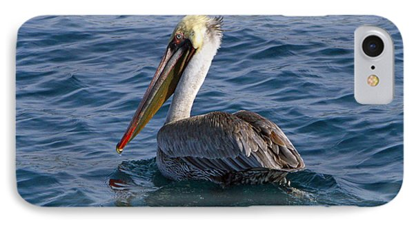 California Brown Pelican Phone Case by Shoal Hollingsworth